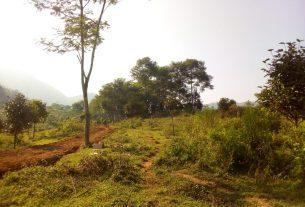 kebun manggis sukaharja sukamakmur