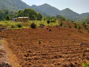 lokasi kebun durian musang king pesona alam pancaniti bogor