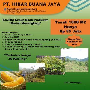 brosur kavling durian musang king pesona alam pancaniti