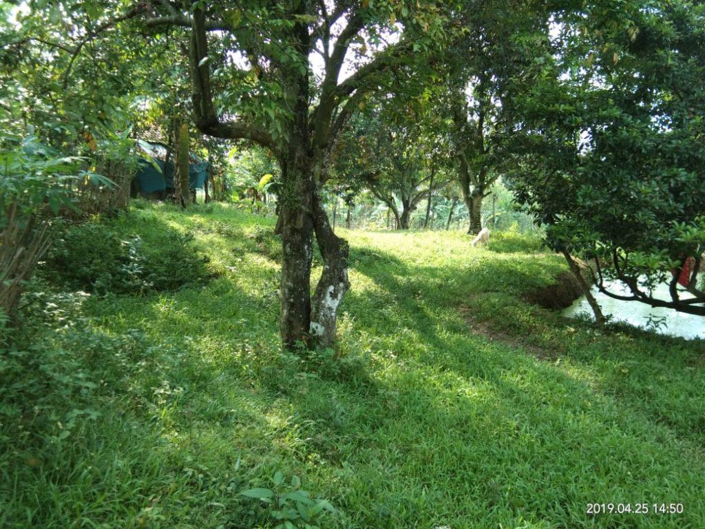 tanah dijual di sukagalih jonggol cocok untuk kebun dan villa