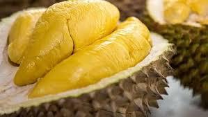 bonus pohon durian monthong di bukit madani
