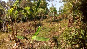 Tanah Dijual di Pinggir Jalan Raya Sukaharja Sukamakmur Bogor Luas 1.000 m2
