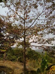 lokasi perkebunan terpadu pesona bukit madani puncak 2