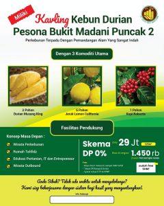 perkebunan durian musang king, bawor pesona bukit madani sukaharja sukamakmur bogor