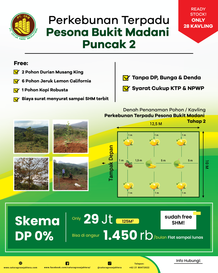 kebun durian musang king di perkebunan terpadu pesona bukit madani
