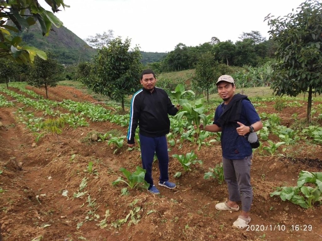 kebun durian pesona bukit madani