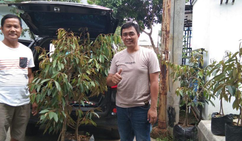 jual bibit unggul tanaman durian bawor di cileungsi