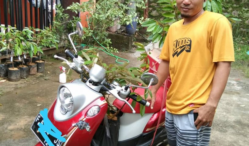jual bibit durian bawor, monthong, musang king, duri hitam, durian merah di cileungsi