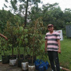 jual bibit durian musang king, bawor, duri hitam, monthong, di cileungsi