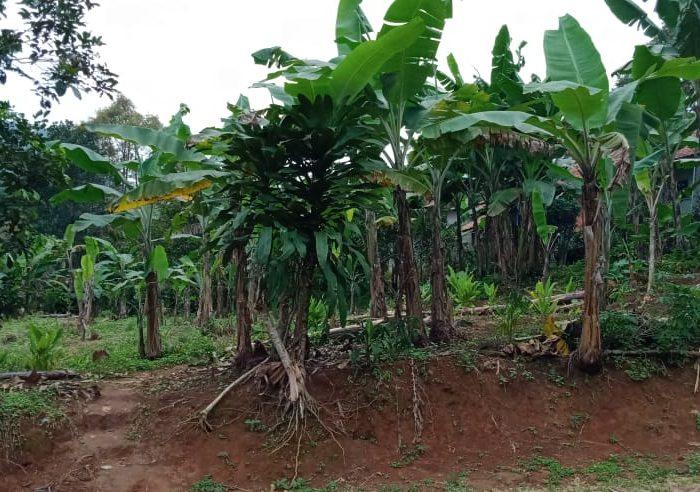 Jual Tanah Subur, Strategis di Selawangi, Tanjungsari, Bogor
