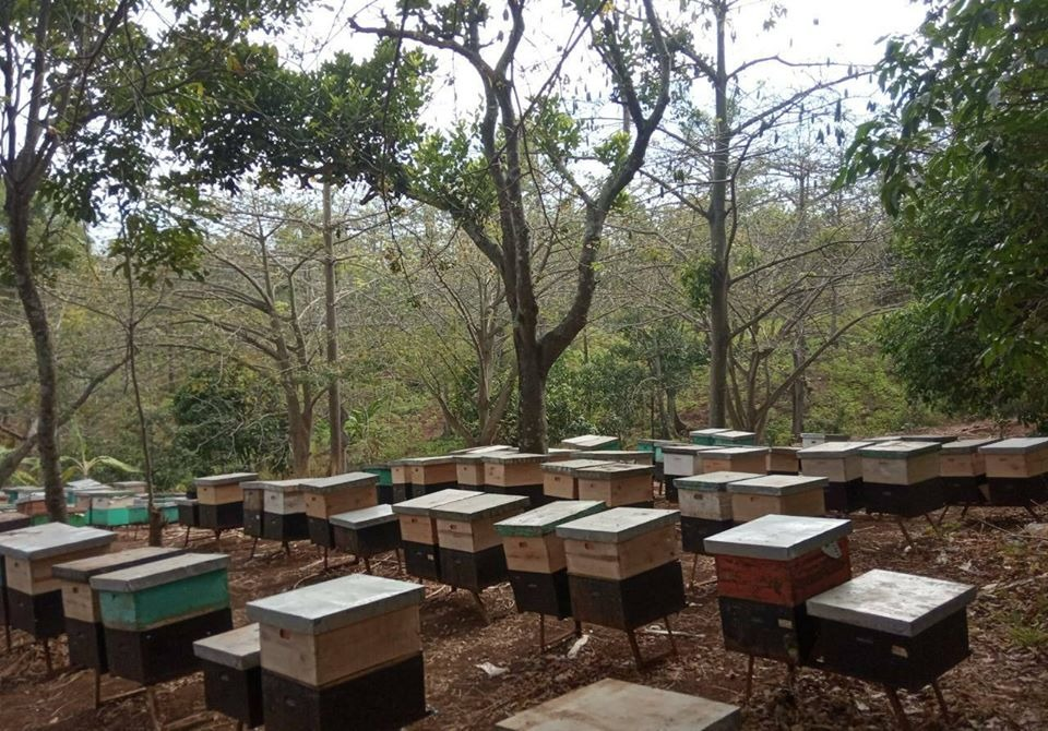peternakan madu randu di pati jawa tengah