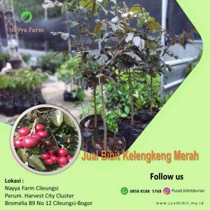 jual bibit buah di Nayya Farm Cileungsi