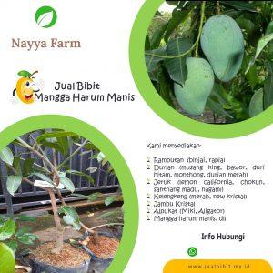 Jual Bibit Buah di Nayya Farm Cileungsi Bogor