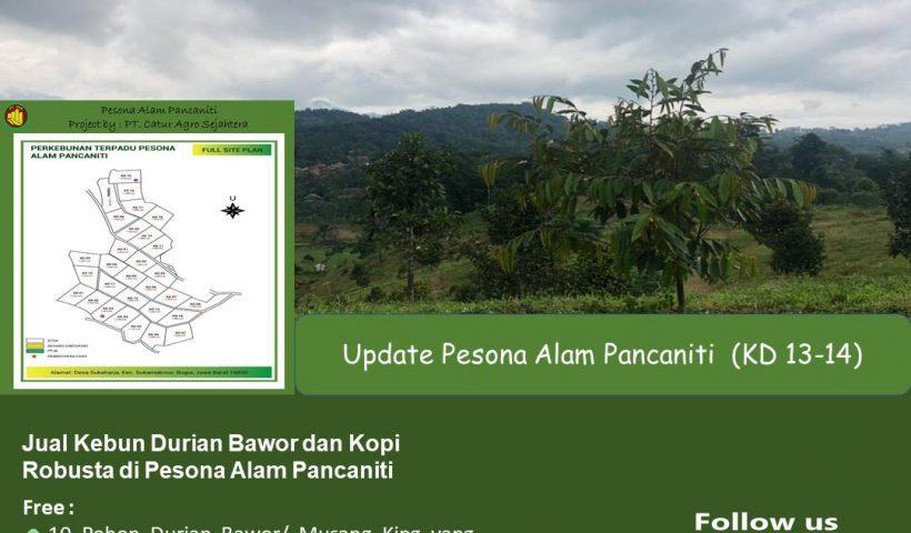 Jual Kebun Durian Bawor dan Kopi Robusta di Pesona Alam Pancaniti