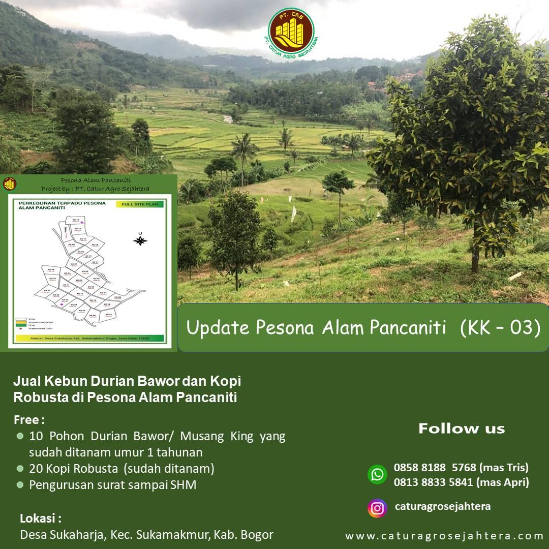 Jual Kebun Durian Bawor dan Kopi Robusta di Pesona Alam Panacaniti