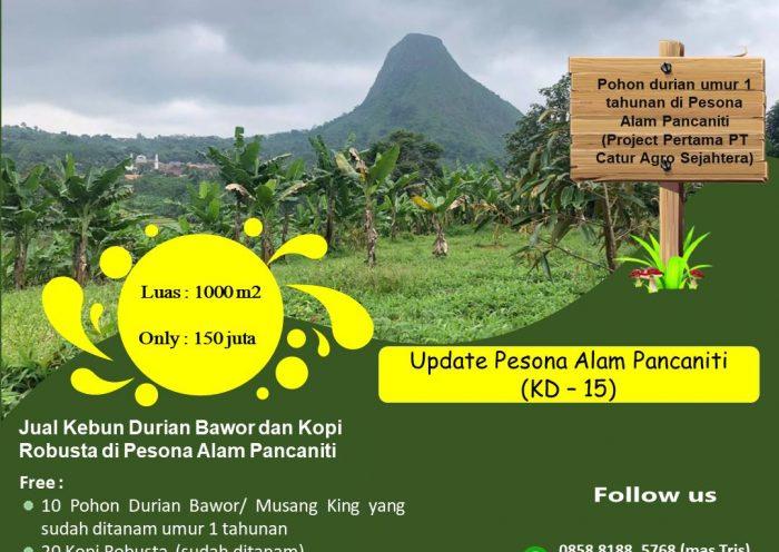 Jual Kebun Durian Musang King dan Bawor di Pesona Alam Pancaniti - Unit Nomor KD15 di Kebun Durian Puncak Dua